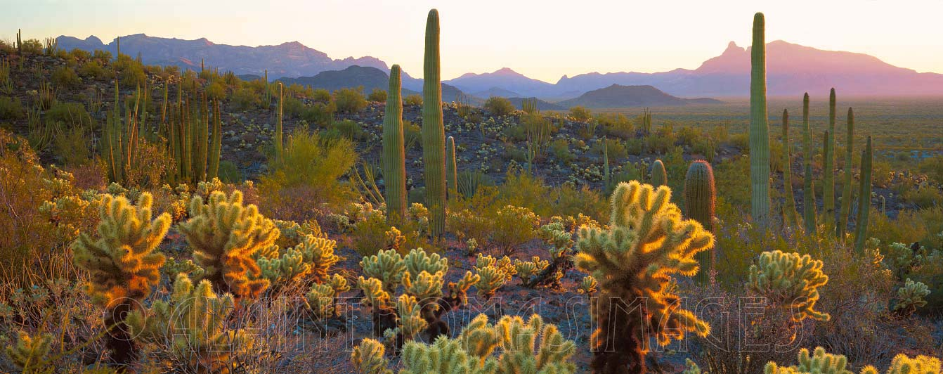 Sonoran Desert, Organ Pipe Cactus National Monument, Arizona